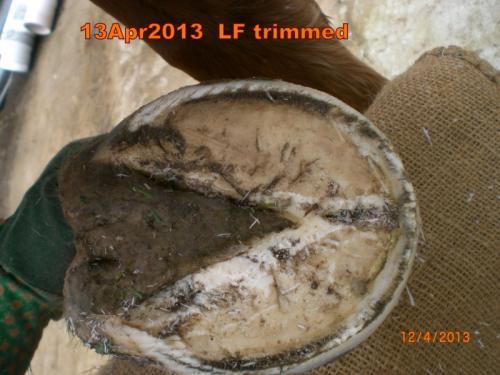 13Apr2013_LF_trimmed2.jpg